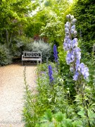 Aconitum x cammarum Stainless Steel