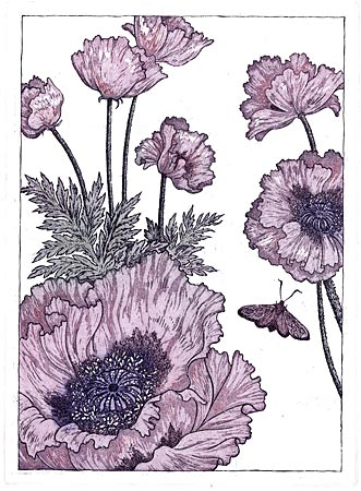 Papaver Orientale Etching