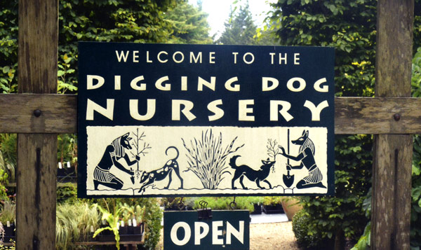 visit digging dog nursery