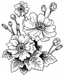 <i>Anemone Fantasy™</i> 'Snow Angel'